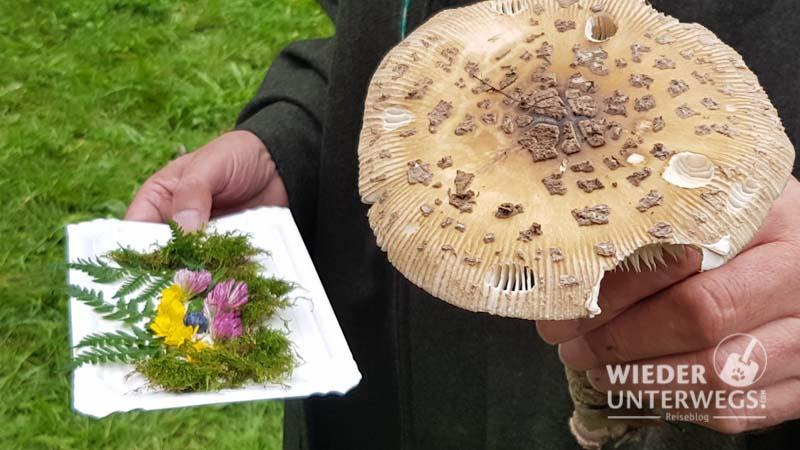 Waldness Almtal September 2017 Web 800px (103 Von 381)