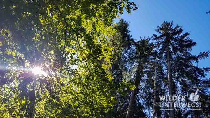 Waldness Sonne