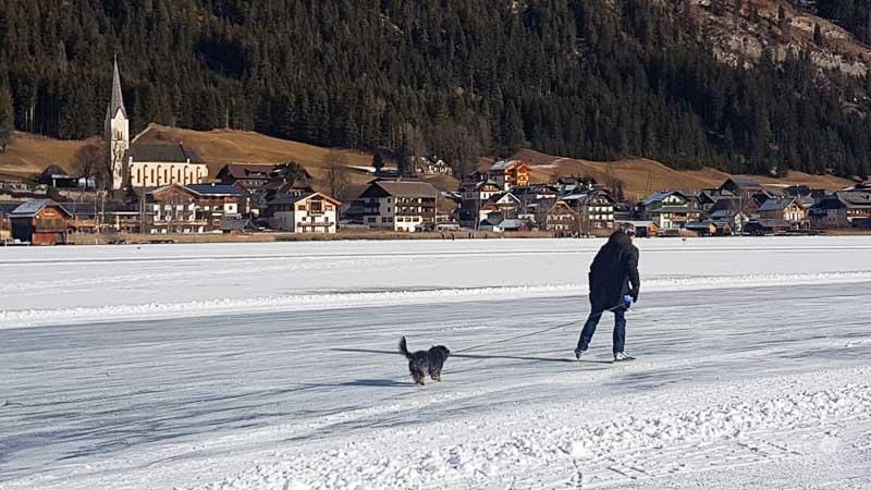 Hund am Eis Weissensee
