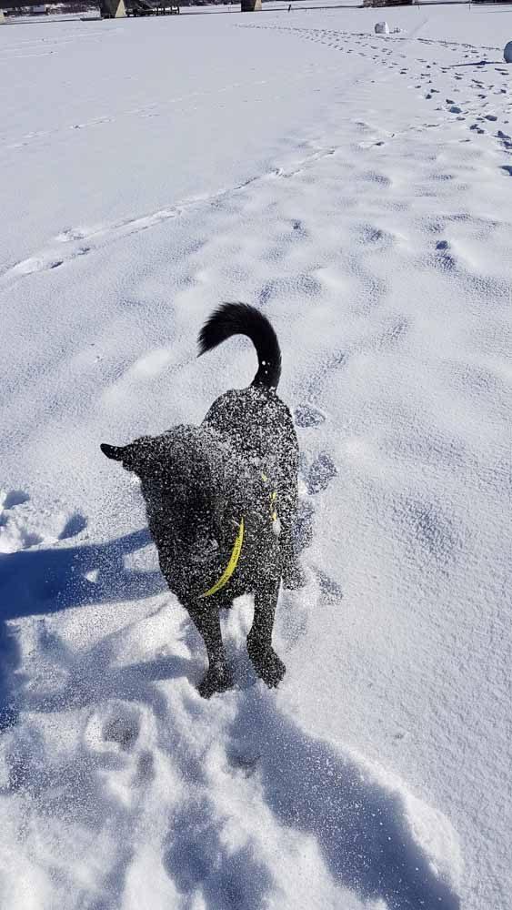 Weissensee Hund