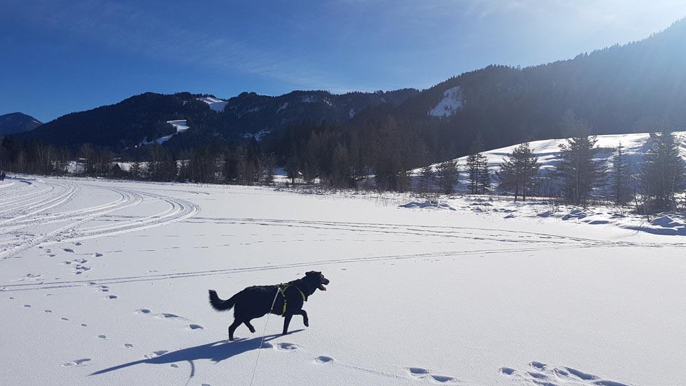 Winterwandern Weissensee