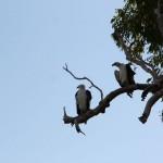 von Litchfield zum Kakadu: Tropische Nationalparks