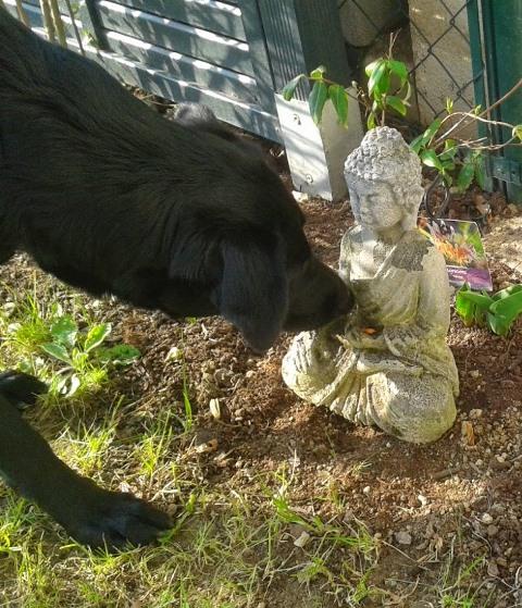 coffee mit buddha