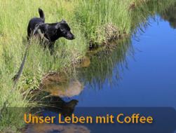 Urlaub mit Hund: leben mit hund